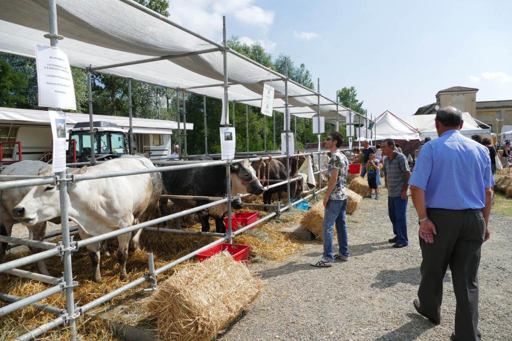 Fiera delle arti e dei mestieri - il bestiame